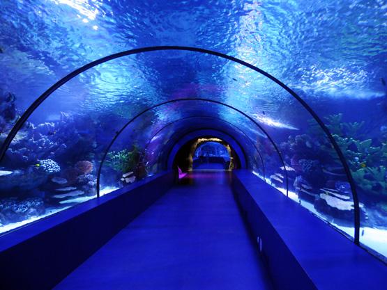 [تصویر:  Turkey-Antalya-Aquarium-Tunnel.JPG]