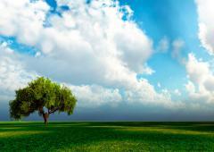 История пророка Адама (мир ему)